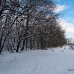 Foto_15.12.2013_sneg  (1)