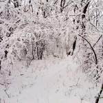 Foto_15.12.2013_sneg  (14)