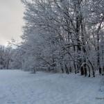 Foto_15.12.2013_sneg  (2)