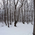 Foto_15.12.2013_sneg  (25)