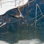 Fishing_priroda (2)