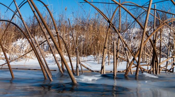 Мороз и ветер день чудесный 1 февраля 2014 год. +Видео