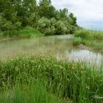 River (33)