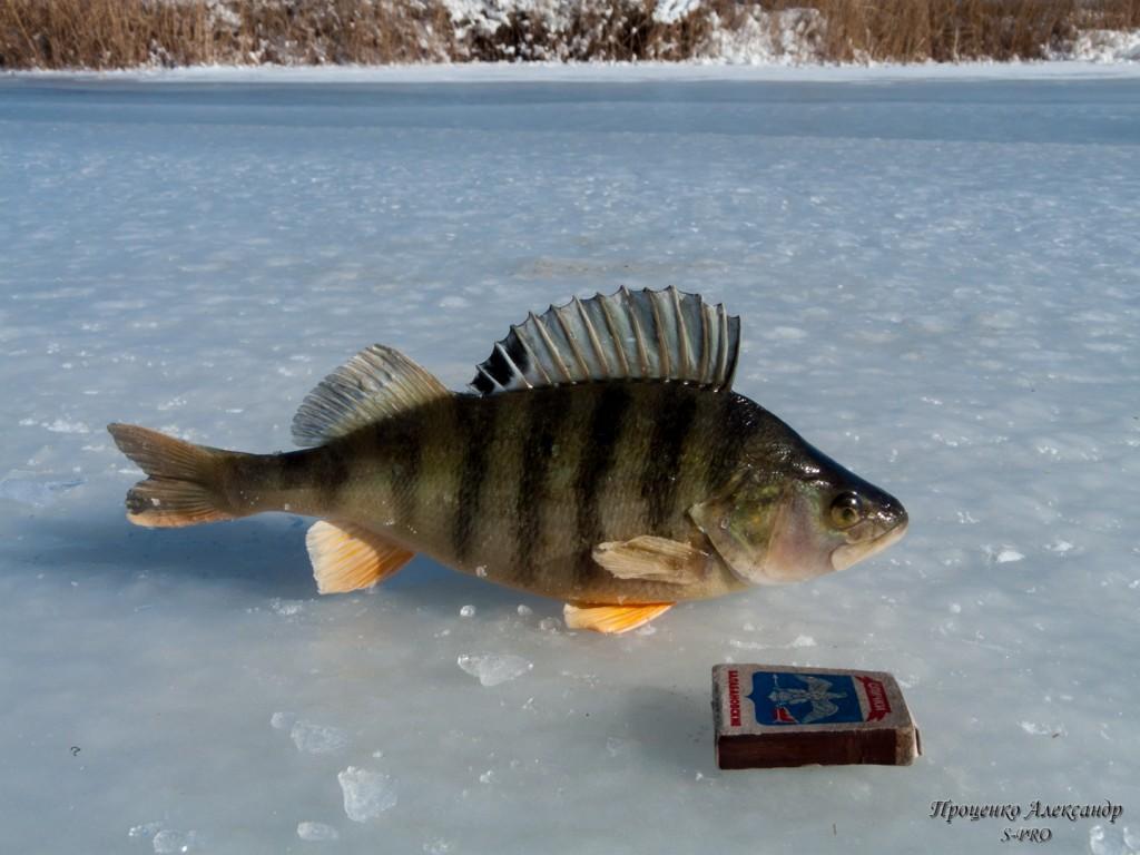 Fishing (9)